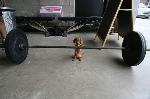 my-new-workout-partner